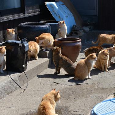 日本猫岛堪称喵星人的天堂 猫奴们速速前往跪拜